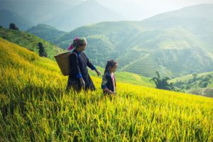 "Study Report on ""Microfinance in Vietnam: The real situation and policy recommendations"""